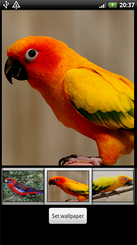 Download livewallpaper Parrots HD for Android. Get full version of Android apk livewallpaper Parrots HD for tablet and phone.
