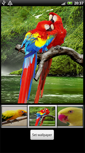 Download Parrots HD - livewallpaper for Android. Parrots HD apk - free download.