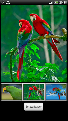 Screenshots of the Parrots HD for Android tablet, phone.