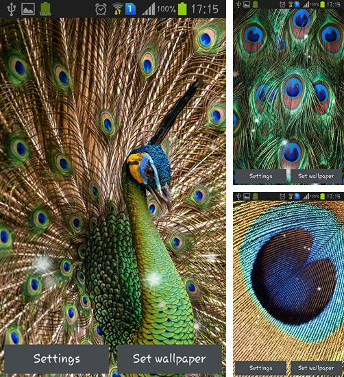 In addition to live wallpaper Rainy London by Phoenix Live Wallpapers for Android phones and tablets, you can also download Peacock feather for free.