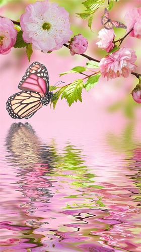 Pink butterfly by Live Wallpaper Workshop