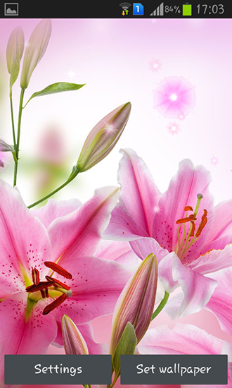 Screenshots of the Pink flowers for Android tablet, phone.