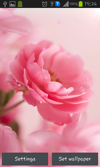 Download Pink roses - livewallpaper for Android. Pink roses apk - free download.