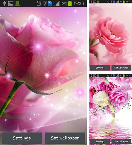 Pink roses live wallpaper for Android