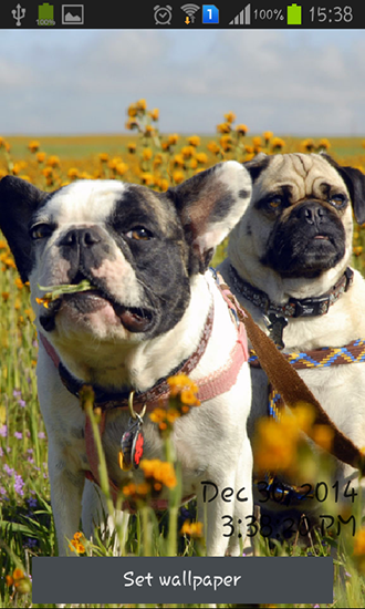 Screenshots of the Playful pugs for Android tablet, phone.