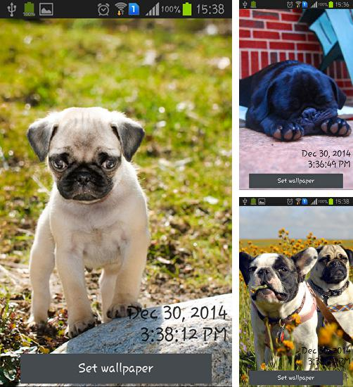 In addition to live wallpaper Leaves 3D for Android phones and tablets, you can also download Playful pugs for free.
