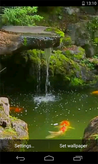 Pond with Koi