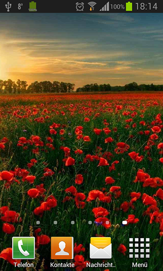 Download Poppies - livewallpaper for Android. Poppies apk - free download.