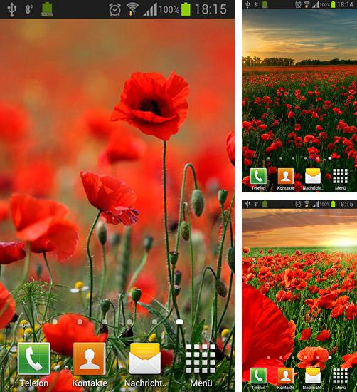 In addition to live wallpaper Material design 3D for Android phones and tablets, you can also download Poppies for free.