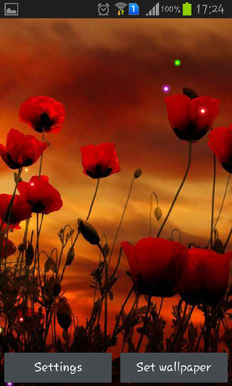 Download livewallpaper Poppy fields for Android. Get full version of Android apk livewallpaper Poppy fields for tablet and phone.
