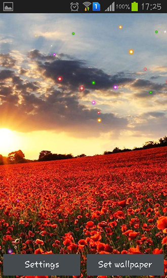 Download Poppy fields - livewallpaper for Android. Poppy fields apk - free download.