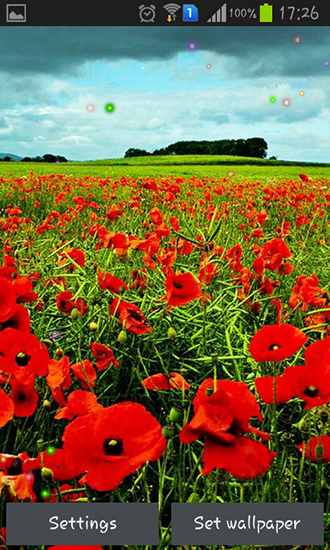 Screenshots von Poppy fields für Android-Tablet, Smartphone.
