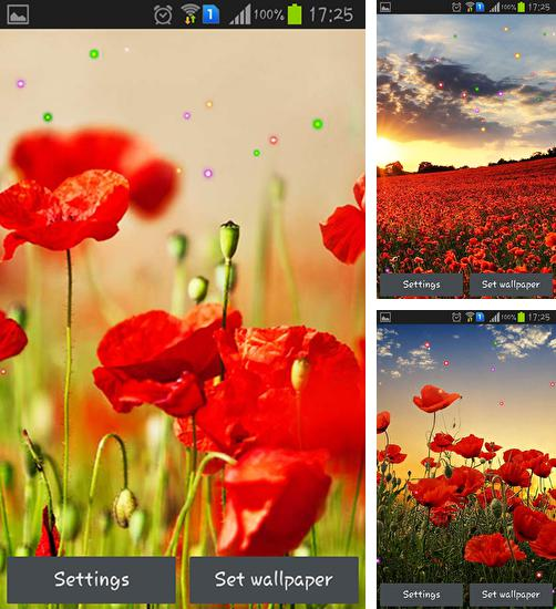 In addition to live wallpaper Best couple for Android phones and tablets, you can also download Poppy fields for free.