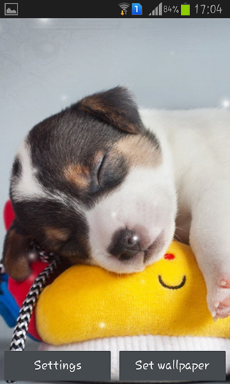 Download Puppy - livewallpaper for Android. Puppy apk - free download.
