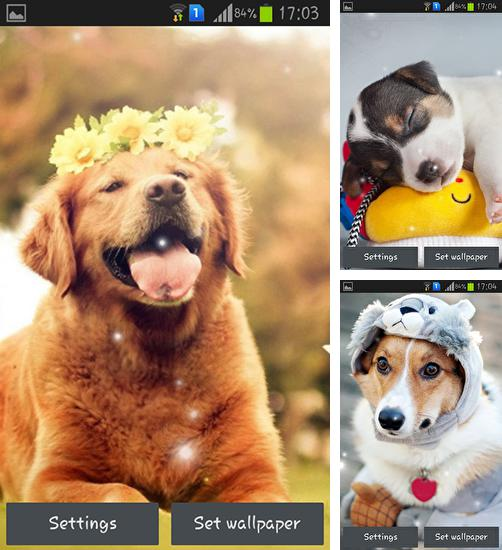 In addition to live wallpaper Magic for Android phones and tablets, you can also download Puppy for free.