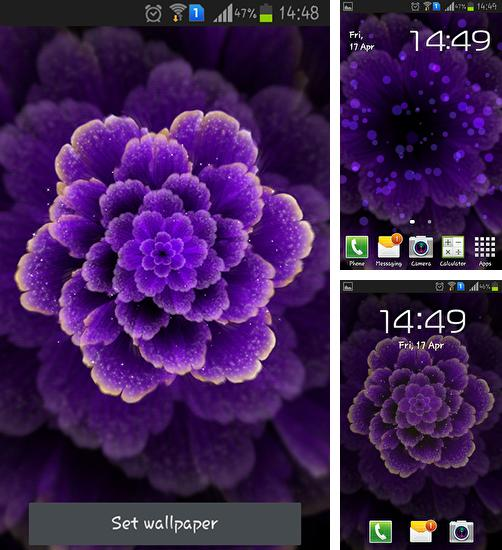 In addition to live wallpaper Red and gold love for Android phones and tablets, you can also download Purple flower for free.