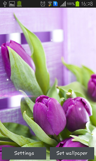 Purple tulips für Android spielen. Live Wallpaper Lila Tulpen kostenloser Download.