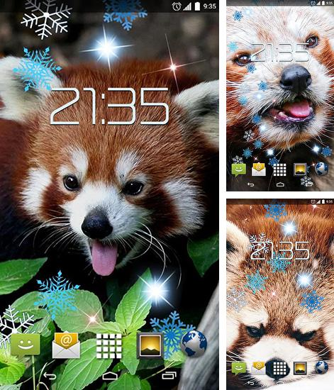 In addition to live wallpaper Pink flowers for Android phones and tablets, you can also download Red panda for free.
