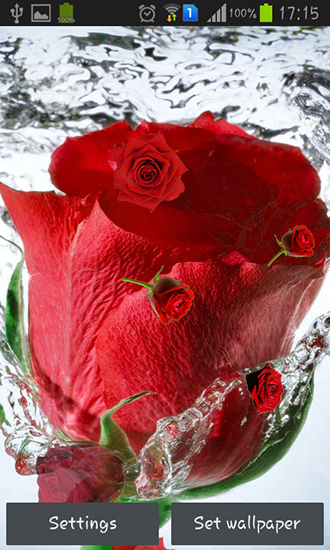 Red Rose Live Wallpaper For Android Red Rose Free Download For
