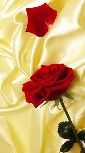 Capturas de pantalla de Red rose by HQ Awesome Live Wallpaper para tabletas y teléfonos Android.