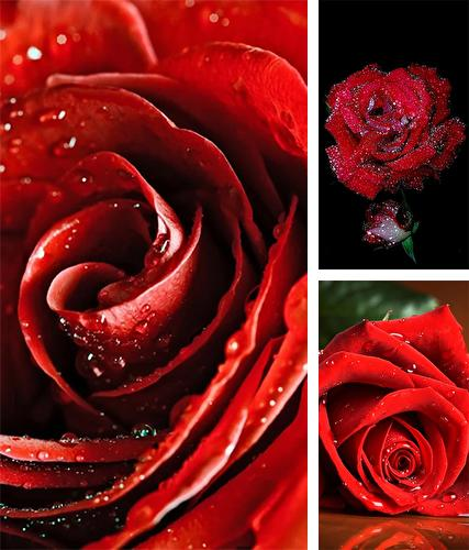 Red rose by HQ Awesome Live Wallpaper