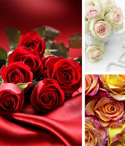 Rose by Creative Factory Wallpapers