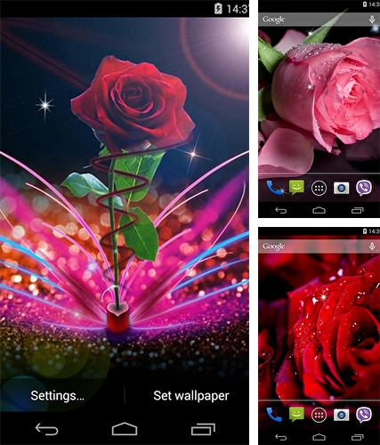 Rose by Wallpapers Pro