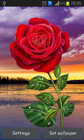 Rose Magic Touch Für Android Kostenlos Herunterladen Live