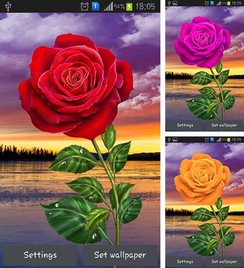 In addition to live wallpaper Dandelion by Live Wallpaper HD 3D for Android phones and tablets, you can also download Rose: Magic touch for free.