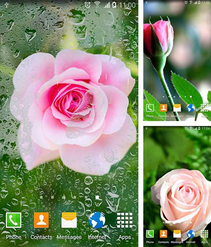 Roses by Live Wallpapers 3D
