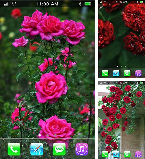 In addition to live wallpaper Dinosaur by Niceforapps for Android phones and tablets, you can also download Roses: Paradise garden for free.