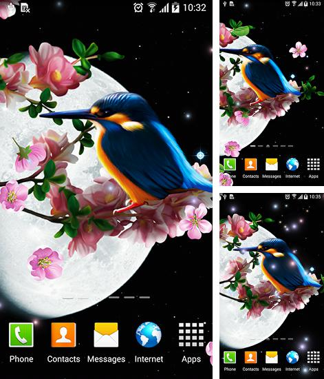 In addition to live wallpaper Landscape by Pro Live Wallpapers for Android phones and tablets, you can also download Sakura and bird for free.
