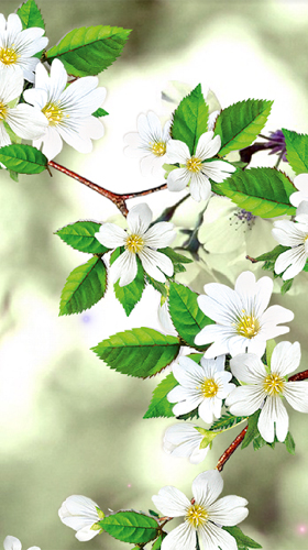 Download Sakura by Amax LWPS - livewallpaper for Android. Sakura by Amax LWPS apk - free download.