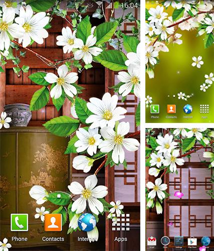 Sakura by BlackBird Wallpapers