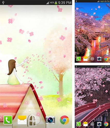 Sakura by live wallpaper HongKong