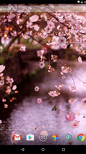 Download Sakura by luyulin - livewallpaper for Android. Sakura by luyulin apk - free download.