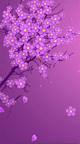 Sakura By Xllusion Live Wallpaper For Android Sakura By Xllusion