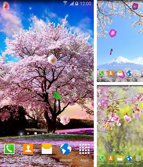In addition to live wallpaper Zebra for Android phones and tablets, you can also download Sakura gardens for free.
