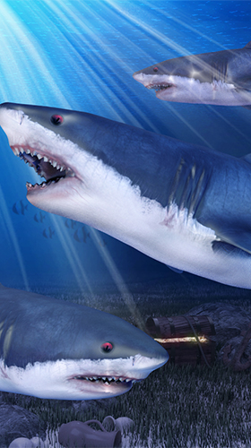 Download livewallpaper Shark aquarium for Android. Get full version of Android apk livewallpaper Shark aquarium for tablet and phone.