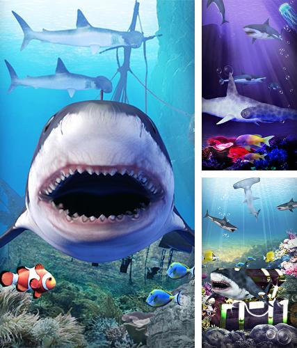 Baixe o papeis de parede animados Shark aquarium para Android gratuitamente. Obtenha a versao completa do aplicativo apk para Android Shark aquarium para tablet e celular.