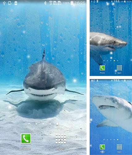 Download live wallpaper Shark by KKPICTURE for Android. Get full version of Android apk livewallpaper Shark by KKPICTURE for tablet and phone.