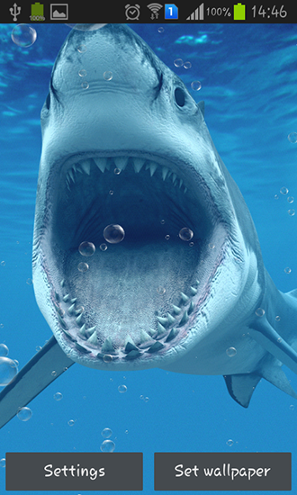 Sharks Live Wallpaper For Android Free Download Tablet And Phone