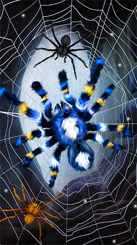 Screenshots von Spider by Cosmic Mobile Wallpapers für Android-Tablet, Smartphone.