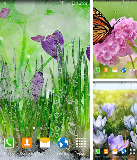 In addition to live wallpaper Teddy bear by High quality live wallpapers for Android phones and tablets, you can also download Spring flowers for free.