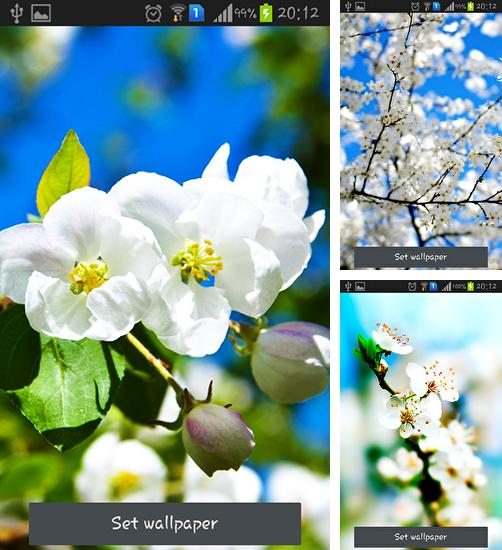 In addition to live wallpaper Sky for Android phones and tablets, you can also download Spring is coming for free.