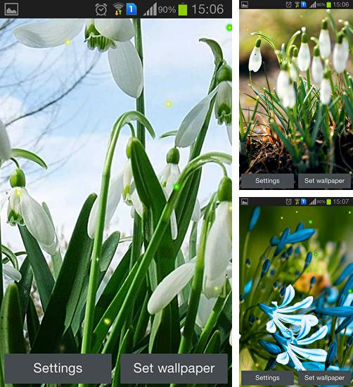 In addition to live wallpaper Sun and dandelion for Android phones and tablets, you can also download Spring snowdrop for free.