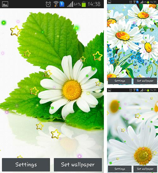 In addition to live wallpaper Disco Ball for Android phones and tablets, you can also download Summer camomile for free.
