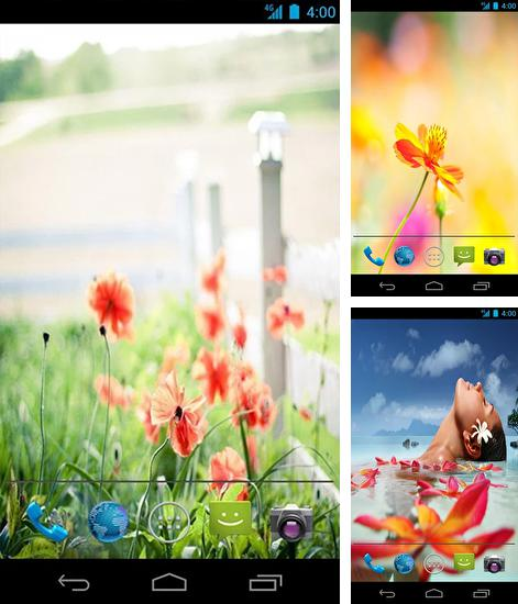 In addition to live wallpaper Butterflies by Fantastic Live Wallpapers for Android phones and tablets, you can also download Summer flowers by Mww apps for free.