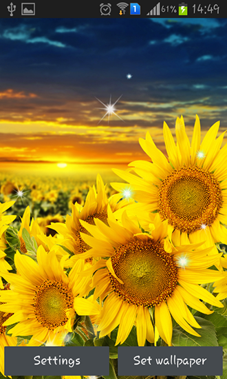 Sunflower by Creative factory wallpapers