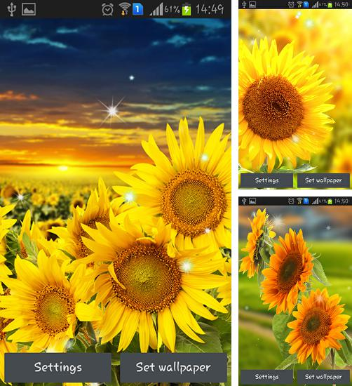 In addition to live wallpaper Sochi 2014: Live pattern for Android phones and tablets, you can also download Sunflower by Creative factory wallpapers for free.